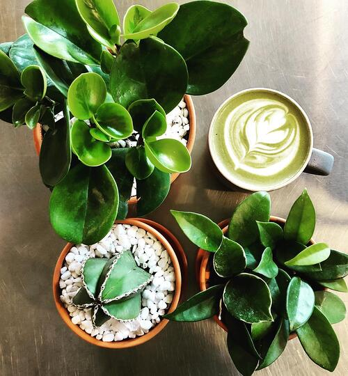 A bird's eye view of some potted plants and a cup of coffee